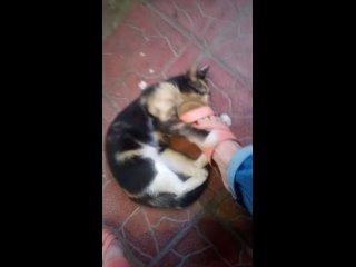 Видео от Татьяны Лосевой