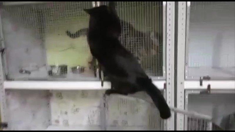 Видео от Кошки Мурлошки г Норильск