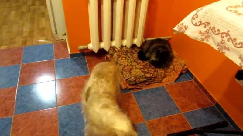 Кошка заняла место собаки