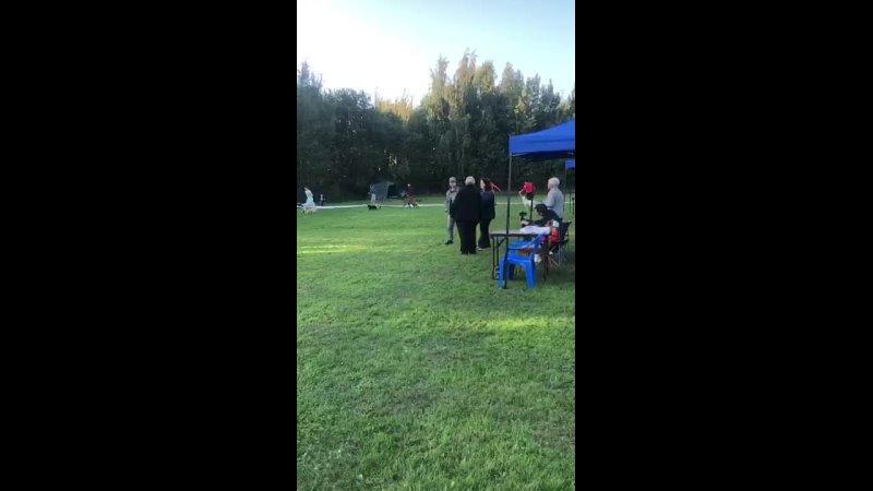 Видео от Щенки аргентинского дога Объявления о продаж