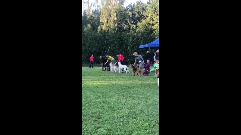 Видео от Щенки РКФ