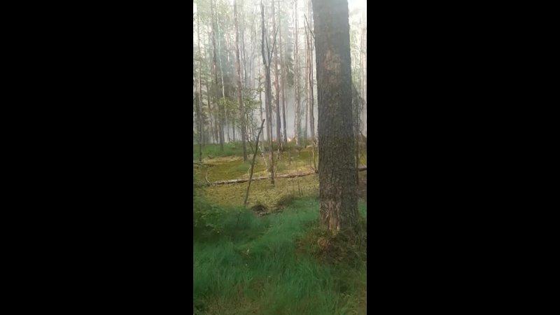 Видео от Galja Kiuru
