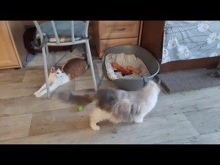 """Wideo od """"Будем добрее"""" помощь животным в Орехово-Зуево"""