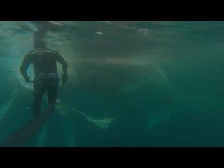 Great White Shark Warns Irresponsible Scuba