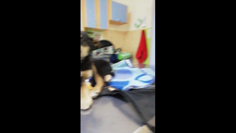Video 1457bc998a4eeb17efdd1d554527d4d8