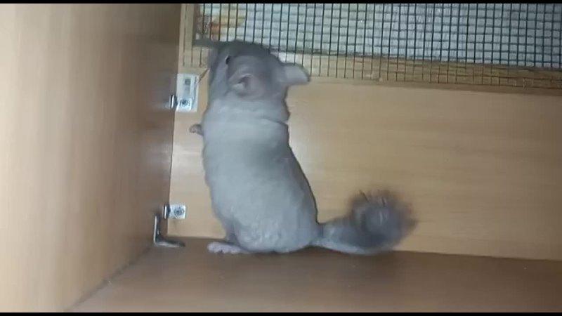 Видео от Елены Трофилькиной