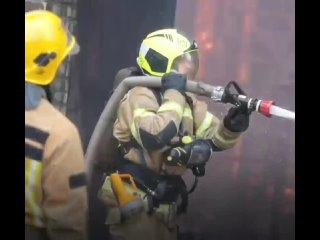 В Петербурге пожарные откачали котика, который надышался дымом