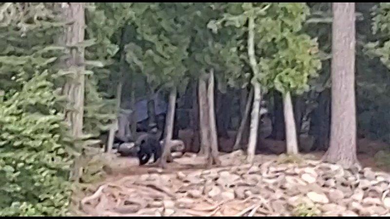 Видео от Как дела