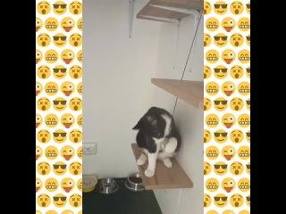 Гостиница для кошек / Зоосалон 4Cats СПб kullanıcısından video