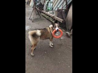 """Видео от Приют для  собак """"Ильинка""""."""