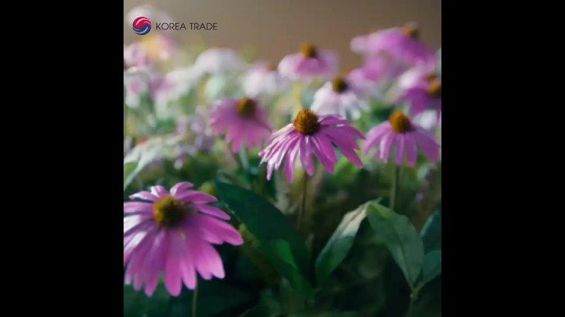 Видео от Korea Trade Опт Корейская косметика