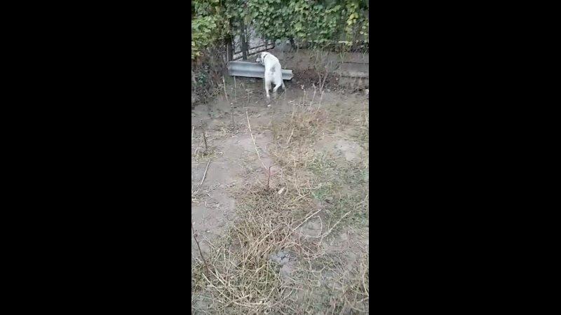 Видео от Общественная Организация Котопес г Измаил