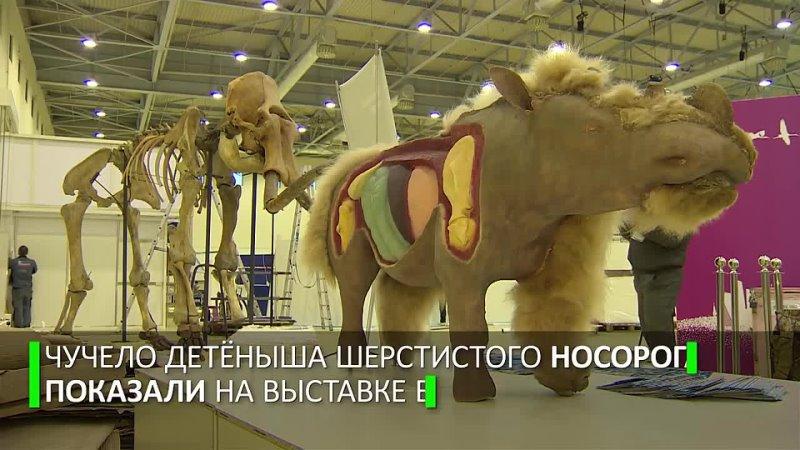 Видео от Оксаны Сомовой