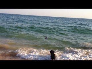 Оди в океане