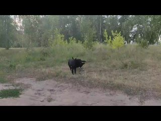 Щенки ВЕО Омская Дружина 5.6 месяцев