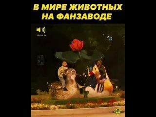 Животные #crazy_vdk