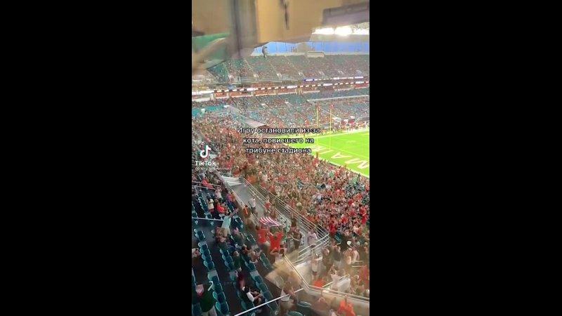 Спасение котэ на футбольном матче