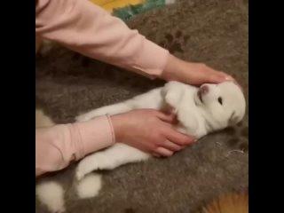 วิดีโอโดย Косметика для собак и кошек * Лежанки для собак