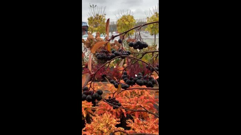 Видео от Садовый Центр Цветы Деревья
