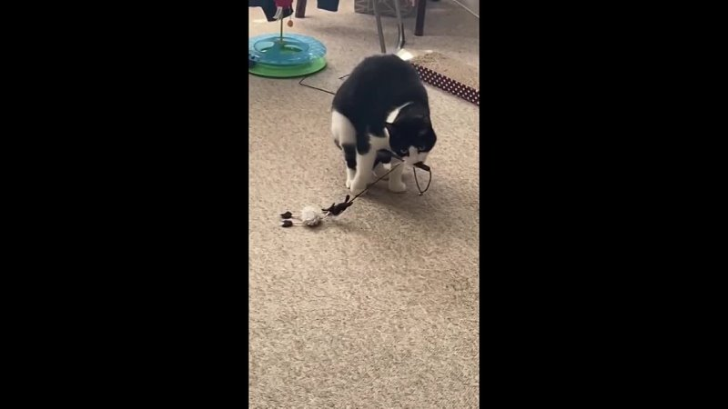 Видео от Группа помощи кошкам Ломоносова