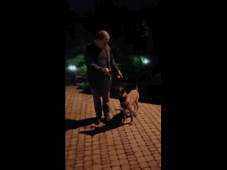 Video by Alexey Andreev