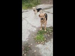 Путь к счастью   Группа помощи животным kullanıcısından video