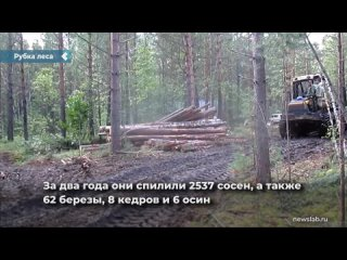 Предпринимателя из Красноярского края осудят за незаконную рубку леса