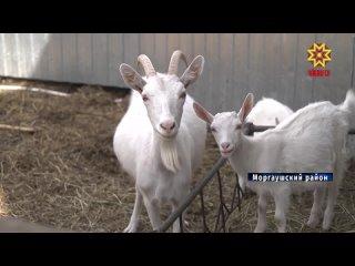 Свиней нет, а запах - есть. В Центр Управления регионом Чувашии поступила жалоба из Моргаушского района на резкий и неприятный