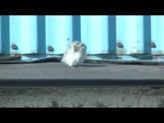 Маленькая птичка на ветерочке