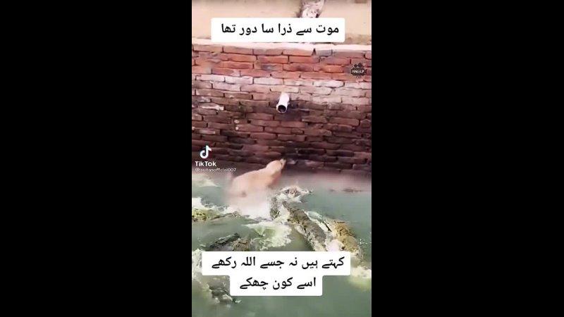 Видео от Маргариты Рось