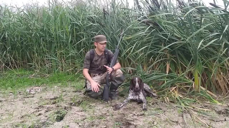 Открытие осенней охоты 2021 Охота с легавой