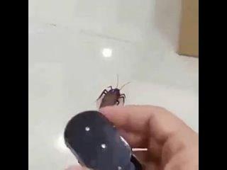Таракашки на радиоуправлении