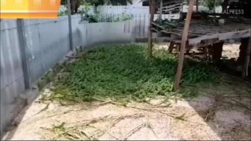 Прям зеленая трава