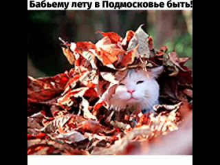 Бабьему лету в Подмосковье быть!Сентябрь 2021 в Московском регионе может стать самым холодным с начала века, а может и за всю