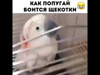 Юмор-и-Приколы