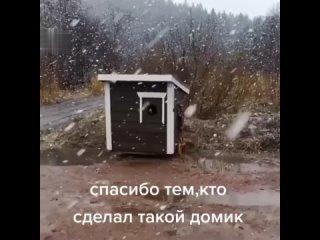 Котячий рaй)