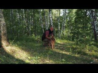 (АС) Атакующие собаки kullanıcısından video