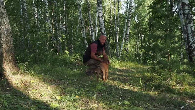 Видео от АС Атакующие собаки