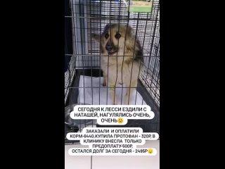 """Video by Томское зоозащитное сообщество """"Открытое сердце"""""""