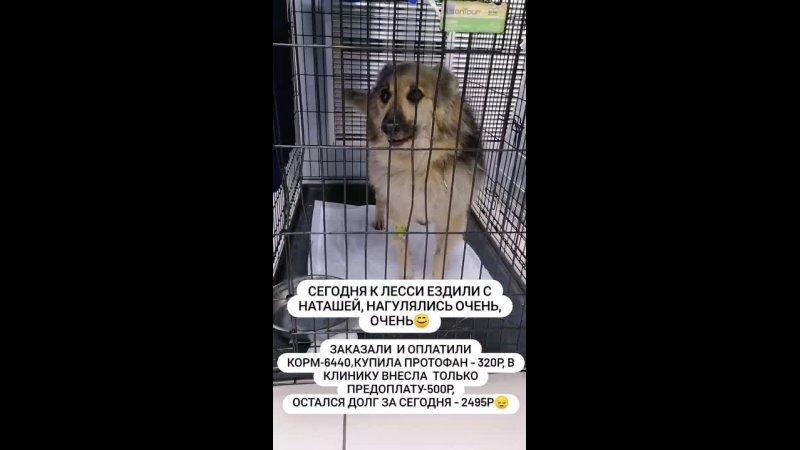 Видео от Томское зоозащитное сообщество Открытое сердце