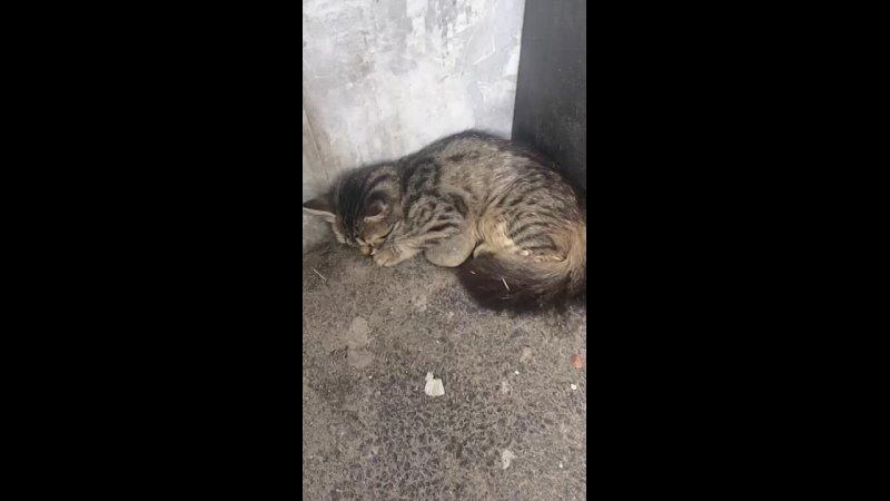 Видео от Бездомные животные Майкопа сообщество волонтеров
