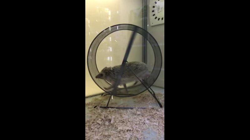 Видео от Зверьё Моё
