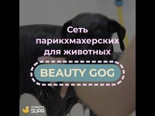 Видео-визитка салона для животных Beauty Dog