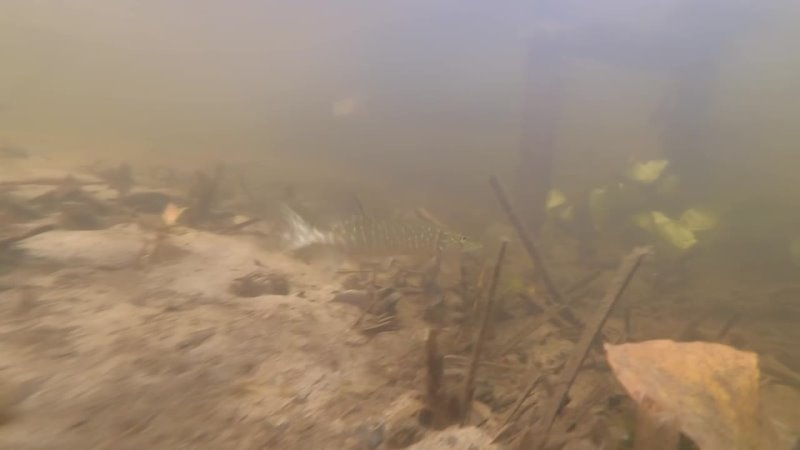 7 Подводная одиссея не реке Битюг Автор Ширкин А В