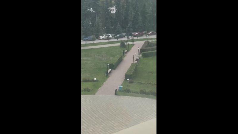Видео от Олега Цендровского