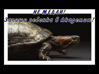 Video by Akademia Geniev