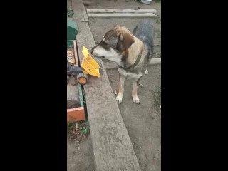 Верный Друг Помощь бездомным животным. Караганда kullanıcısından video