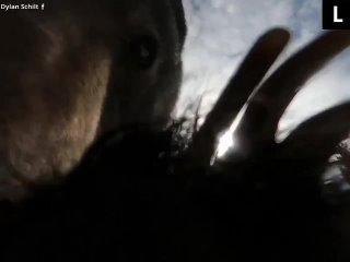 Косолапый решил стать видеоблогеромМедведь нашёл в...