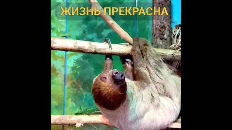 Видео от Беговой Хорошевка