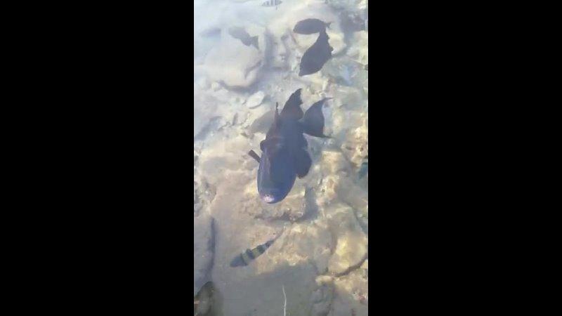 Видео от Анны Опочинской